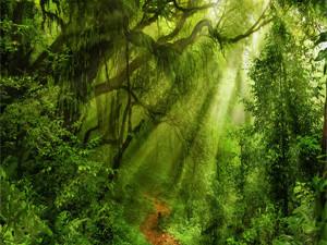 Jungle photo 1