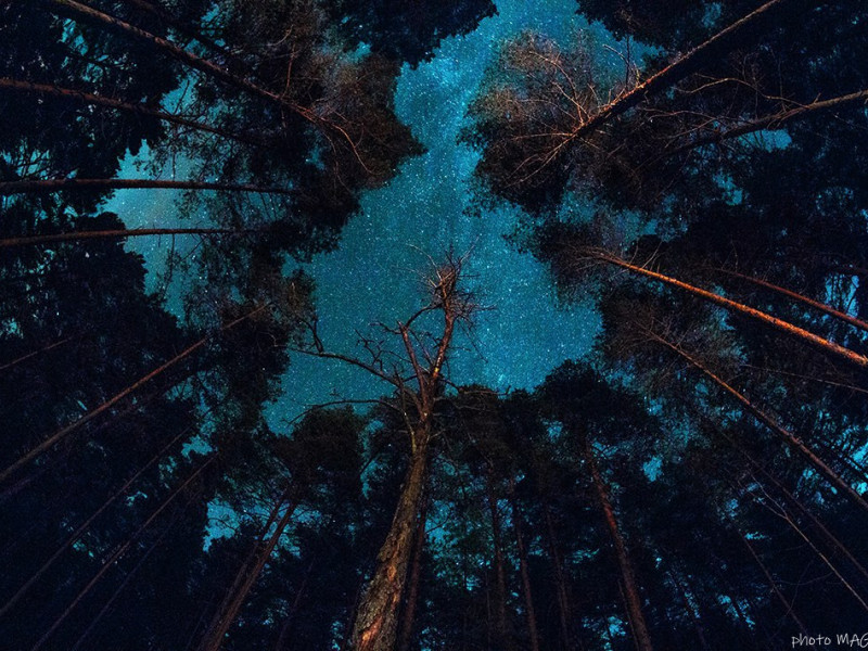 """Quest adventure """"Dark Secrets of Gungerburg"""" photo 1"""